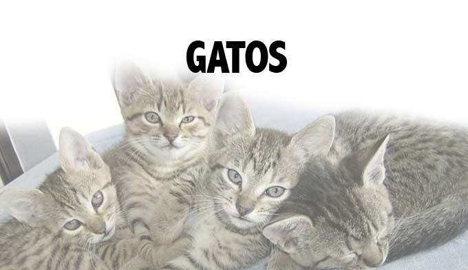 Visita virtual de gatos